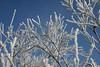 Januar (pixel-rausch) Tags: winter snow cold tree calendarshot