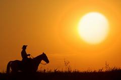 Andando... (Eduardo Amorim) Tags: sunset brazil horses horse sun sol southamerica silhouette brasil caballo cheval atardecer caballos solei