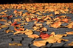 Morti stagionali (Stefano Pinci Photographer) Tags: park parco color fall leaves foglie garden death leaf natura morte autunno colori giardino arancione caldi