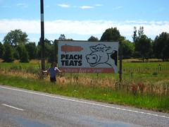 Peach Teats (fawst66) Tags: billboard sh1 statehighway1 peachteats