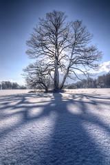 shadow dance (gregor H) Tags: blue winter shadow sun snow tree backlight geotagged sterreich frost aut vorarlberg satteins geo:lat=4722535169 geo:lon=965559876
