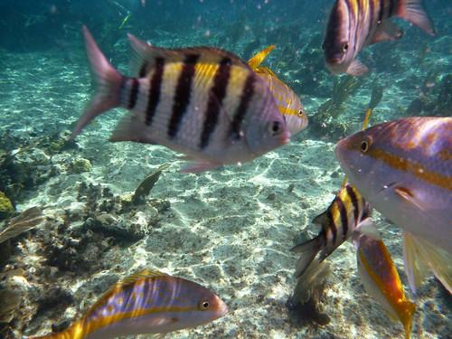 Arrecife de coral Cuba
