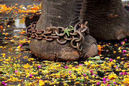on flowers i walk, in shackles...!!