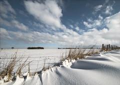 Shaped by the wind (Danil) Tags: winter holland netherlands beautiful landscape march daniel nederland wideangle groningen polder snowscape landschap 2010 zeedijk d300 10mm waterkering reiderland powdersnow duistland noordoosten nieuwestatenzijl stuifsneeuw 1024mm drieborg behindthedike kwelderdijk kroonpolderweg