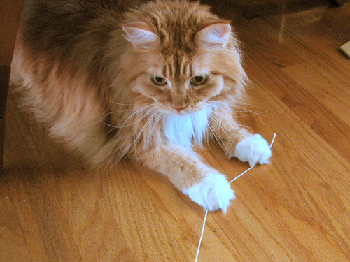 Cat String 7