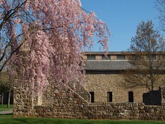 Lock Ridge Furnace - Alburtis, PA (Don C. over 1.8 Million Views) Tags: spring pennsylvania excellent blooms weepingcherry alburtis lockridgepark