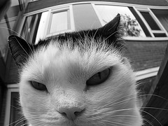 pissed off (Caroliwen) Tags: holland dutch cat canon blackwhite kat zwartwit angry poes boos