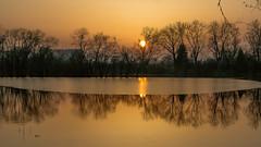 The last ice... (.: mike | MKvip Beauty :.) Tags: sony⍺6000 sonyilce6000 sonyalpha6000 sonyalpha sony alpha emount ⍺6000 ilce6000 primelens prime manualexposure manual samyangfe50mmƒ14asifum samyangfe50mmƒ14 samyangfe50mmf14 samyang 50mm ƒ14 aspherical umc af handheld availablelight naturallight backlight backlighting sunset sunsetlight shallowdof bokeh bokehlicious beyondbokeh extremebokeh smoothbokeh dreamy soft zen nature orange yellow spring knielingersee lake water ice maxau karlsruhe germany europe mth mkvip samyangfe50mmƒ14asifumcaf ngc npc