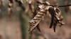 The last days of winter (MH *) Tags: blätter leaves wald forest pentax emmendingen allmend stimmung mood vanagram beyondbokeh