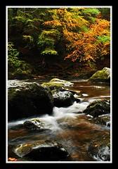 Untitled (Chris Evans 1973) Tags: autumn hermitage dunkeld braan