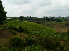 Tanzania01Kipengere08 (tjabeljan) Tags: africa tanzania afrika ontheroad teaplantation djoser traversa theeplantage africacom kipengere kipengeremountains