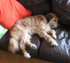 snoring pup!