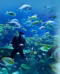 marine life park 3