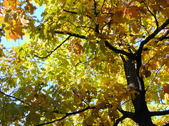Fall Colors Boulder   DSCN0290