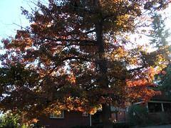 Fall Colors Boulder   DSCN0513