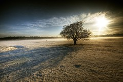 Winter Sun (Gerry Chaney) Tags: ireland winter snow tree nature landscape newbridge hdr chaney kildare curragh photomatix sigma1020 abigfave platinumphoto nikond90 yourwonderland magicunicornverybest gerrychaney