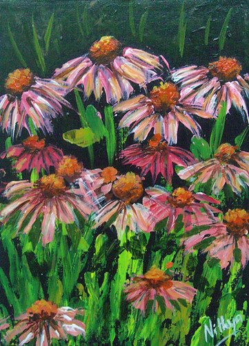 Coneflower field