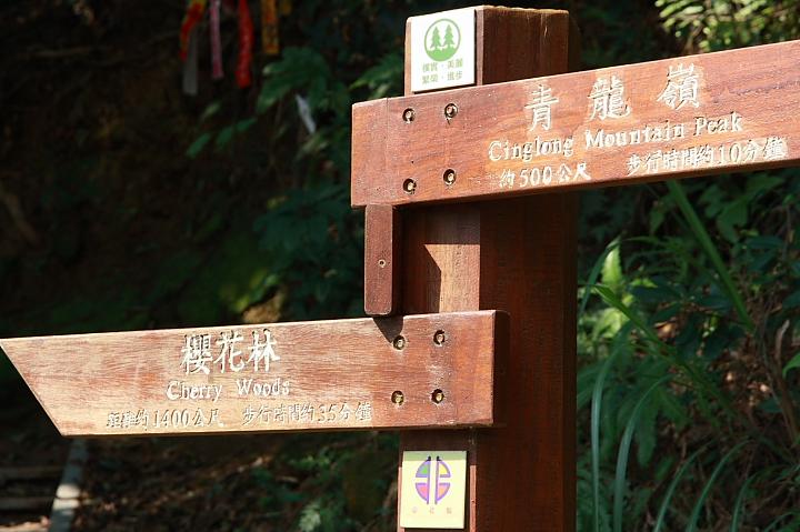 樹林大同山青龍嶺的櫻花林0007