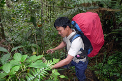 Pani - Kerinci Mountain Guide