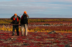 Checking out the Tundra (Webber's Lodges) Tags: snowgeese trophycaribou northernmanitobatundra