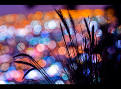 Night Lights (Emmanuel_D.Photography) Tags: california park light color nature grass night canon circle los nice angeles bokeh awesome l series f2 griffith f4 emmanuel astig 135mm 135l 50d dasalla