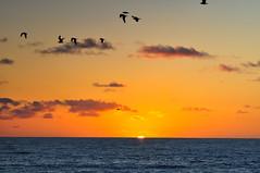 DSC_0717 (rrlanejr) Tags: trees sunset sea beach metal san seagull diego pelican surfing palm oceanside seal lions detector legoland