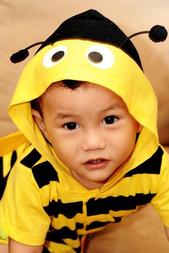 Amirul Bee 5i