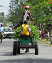 Carting Grass (NigelDurrant) Tags: road street people horse men cars southamerica grass car guyana georgetown vehicle queenstown cart load newgardenstreet