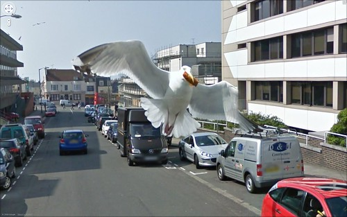 pigeon of Google Maps street view