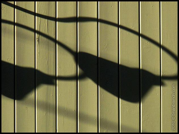 P1090190_shadows
