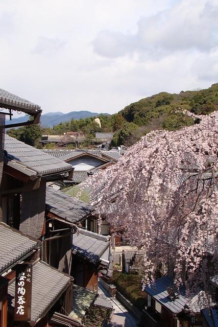 Kyoto in Bloom
