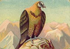 oiseauchromos 11