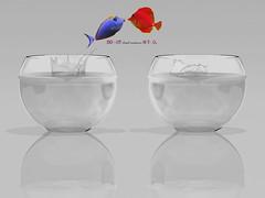 StrunkfishWhite (Ryaagatep) Tags: france nature animal rouge aquarium eau solitude suicide ami amour concept splash animaux amis maison poisson groupe plein bulles couleur joie saut seule mouvement poissons solitaire bulle jetdeau mutation seul bocal sauter loyer assurance logement colocation heureux poissonrouge grandir gouttesdeau respirer sortir suivant ausuivant mutuelle survie enthousiasme survivre entreprendre besoindair sennuyer crisedulogement tournerenrond besoindaide changerdevie prendredesrisques sauterdejoie appartementtroppetit loyertropcher fairelegrandsaut besoindamour changerdelogement sagrandir agrandirsafamille fonderunfoyer ambianceaquatique changerdeposte montersaboite serendreunique versunmondemeilleur conditiondevie manquerdair