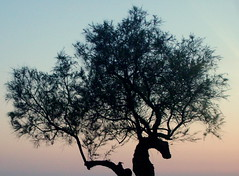 seahorse trunk (Lizzy GF) Tags: pink sea sky horse tree silhouette branch seahorse branches clear bark