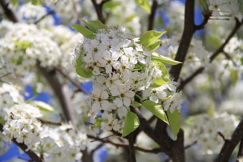 White Flower 03