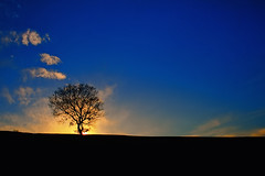Lonely tree [explored] (Nick-K (Nikos Koutoulas)) Tags: blue sunset sky sun tree clouds one nikon alone nikos minimal lonely f28  3570mm  kozani   d700      gvr1 koutoulas