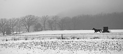 B&W Homeward on a foggy morning (WORLDS APART PHOTO) Tags: horsebuggy amish amishcountry countryside foggy plain landscape snow outdoors wisconsin sewisconsin horse buggy amishbuggy winterscene monochrome bw field