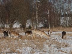 20170213100495 (koppomcolors) Tags: koppomcolors winter vinter