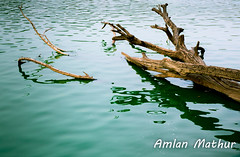 Urban decay (Amlan Mathur) Tags: alge asia conservation contaminated day deforestation delhi dirty flood froth garden green hauz india khas lake log nature open park polluted pond public space spaces water waterbody