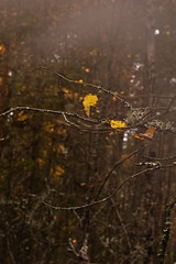 Autumn Leaf (emilkarl) Tags: nature hammarö hammar värmland sigma1770 nikond40 vrmland fiskvik