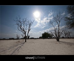 Desert Rose! (vineetsuthan) Tags: trees sky sun clouds photoshop lens sand exposure raw desert angle farm wide ostrich oman blending