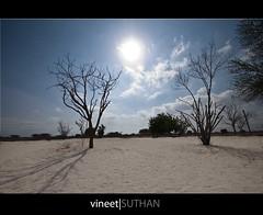 Desert Rose! (vineetsuthan) Tags: trees sky sun clouds photoshop lens sand exposure raw desert angle farm wide ostrich oman blending
