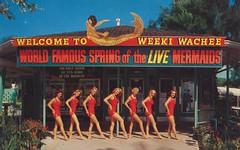 Welcome to Weeki Wachee - Spring of the Live Mermaids (Jordan Smith (The Pie Shops)) Tags: vintage women florida postcard 1960s mermaid weekiwachee