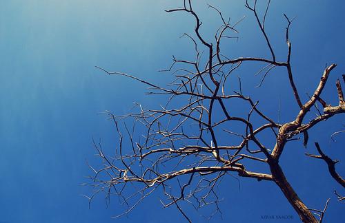 ::pokok::