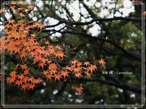 2009-12-11 京都 097 R