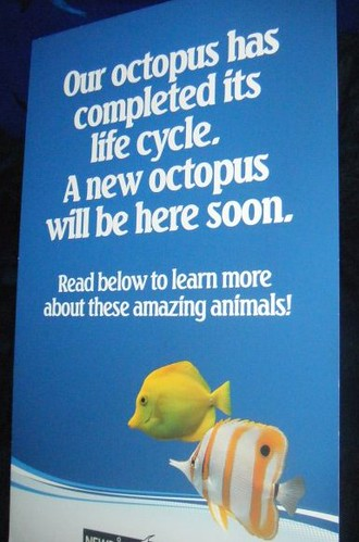 Our octopus has completed its life cycle. A new octopus will be here soon.