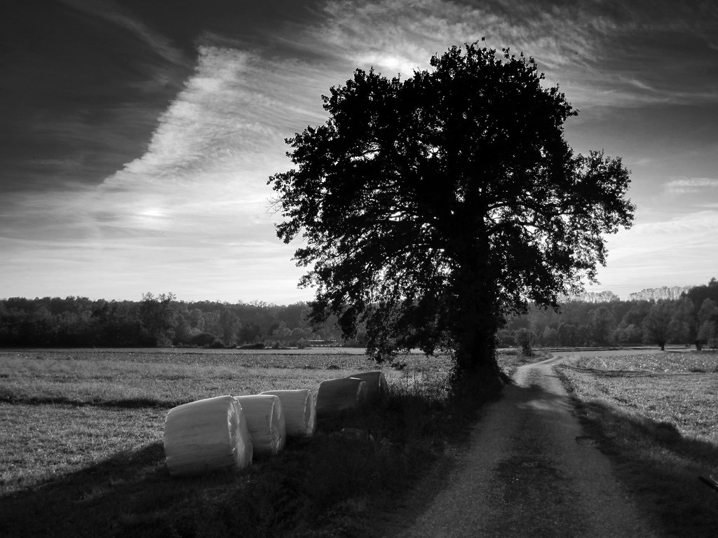The road & the Tree