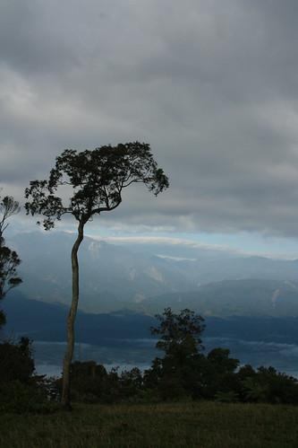 金針花田中常立著一棵樹,看起來特別孤傲。