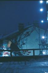 tropical winter wonderland (mariapiessis) Tags: film stpetersburg russia olympus saintpetersburg om2 sanktpeterburg питер россия