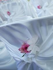 Showboat - Wedding Chair detail (Mariposa Cruises) Tags: cruise wedding toronto ontario canada parties decor weddingpictures setups we1 mariposacruises